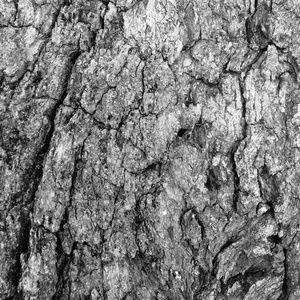 Abstract Black & White Photo Wall Art Tree Bark 6
